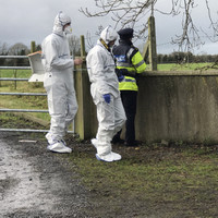 Teenage boy arrested in connection with murder of Italian national in Offaly