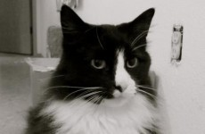 VIDEO: Existential French Cat of the Day