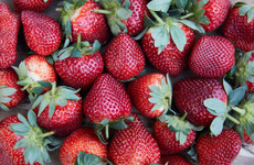 Australia supermarket chain bans needles amid strawberry crisis