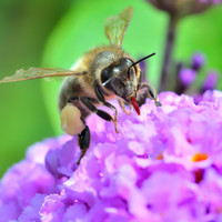 Warm weather and busy keepers meant a good summer for Irish bees