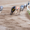 Challenge over investigation into greyhound who tested positive for banned substance dismissed