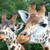 6 animal-tastic spots to bring the kids to this month - from wallaby farms to creepy crawlies