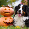 Worried about your pet being frightened this Halloween? Experts advise on how to keep them calm