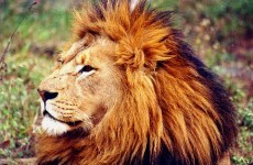 Man killed by lions while showering at campsite