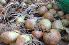 As winter approaches now is the time to think about growing your own onions