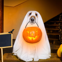 Poll: Will you be dressing up for Halloween this year?