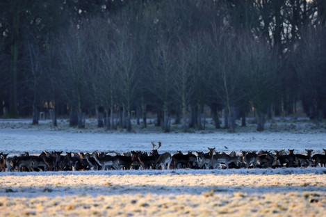 Frost at the Phoenix Park (File photo)