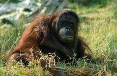 Quiz: Is this animal extinct yet?