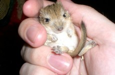 It's Friday, so here's a slideshow of gerbils from around the world