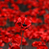 Irish people are divided on whether their politicians should wear the poppy