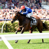 Aidan O'Brien's Cliffs of Moher suffers fatal injury at the Melbourne Cup