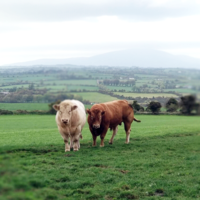 'It's not just buying beef, it's a whole new system': An Irish farmer on what it takes to supply McDonald's