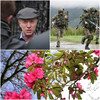 'Nowhere near enough': Healy-Rae reiterates army call as €100k funding to fight rhododendrons announced