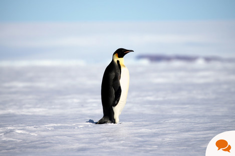 File photo of a penguin in Antarctica