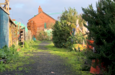 'We need more of this, not less': Liberties locals up in arms over plans to 'bulldoze' allotments and community garden