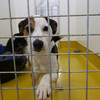 'They deserve a second chance': ISPCA appeals for new homes for nine rescued Terrier dogs