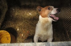 "Over 20 dogs rescued from ""squalid conditions"" in Co Laois"