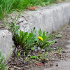 Dublin City Council to spend half a million euro on a 'weed control service'