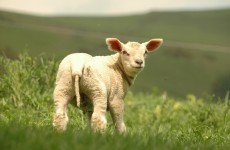 Lambs, Crisp Fest and The Life of Brian: What's on this Bank Holiday Weekend