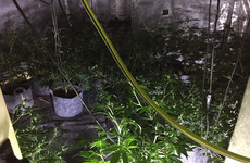 Gardaí seize 320 cannabis plants at 'sophisticated' Monaghan growhouse