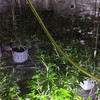 Gardaí seize 320 cannabis plants at 'sophisticated' Monaghan growhouse