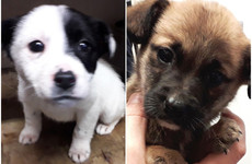 Puppies found among discarded rubbish rescued after passerby heard their cries
