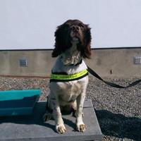 Detector dog Meg sniffs out nearly 70 kilos of cannabis at Dublin port