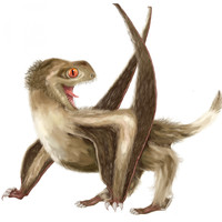 Breakthrough from scientists in Cork shows flying reptiles had feathers over 200 million years ago