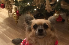 Here are 10 predictions for 2019 that were made by a chihuahua named Spider