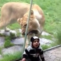 How not to... video your child at the zoo