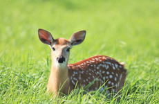 US judge orders poacher to watch repeat screenings of Bambi as part of sentence