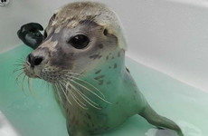 So, what do all the seals at Seal Rescue Ireland get up to over Christmas?