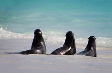 Outrage in New Zealand as six baby seals found decapitated