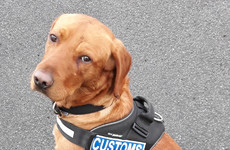 Detector dog James helps seize €220k worth of cannabis at Dublin Port