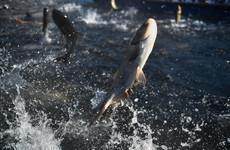 Large fishing trawlers banned inside six miles of Irish coast under new shake up