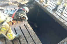 Firefighters rescue cattle from slurry tank on Tyrone farm
