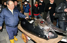 Japan's 'Tuna King' just paid €2.7 million for this whopper fish