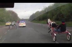 UPDATED: Hair-raising video of Gardaí and horse pursuit on carriageway