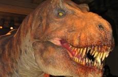 Man, 23, legally changes name to Tyrannosaurus Rex