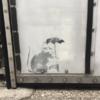 Banksy in Tokyo? City takes a closer look at graffiti resembling artist's work