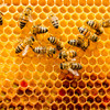 Bees have brains that can figure out basic maths, new study finds