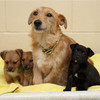 Tati and her puppies were abandoned at the side of the road - Dogs Trust took them in