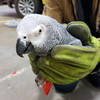 Polly want a discount German cracker? Lidl might have solved the mystery of the Dublin Airport parrot