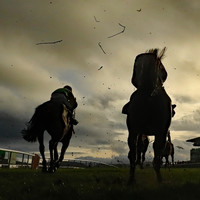 Chosen Mate winner by a nose as Gordon Elliot claims victory in Naas