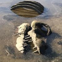 'Dinosaur bones' discovered in River Boyne are not dinosaur bones