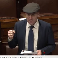 'Losing the war of the rhododendrons': Healy-Rae says invasive weed in Killarney is getting worse