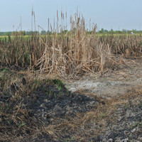 Department warns that people who illegally burn land risk prosecution