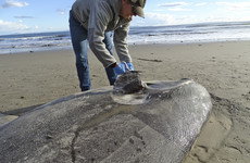 Rare sea creature washes up on California beach thousands of miles from home