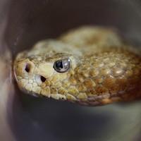 Man bitten by rattlesnake in Wal-Mart