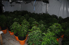 9 people arrested and cannabis plants worth €640,000 seized in organised crime crackdown